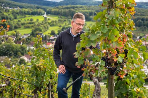 Thomas Walz im BAdenweiler Römerberg - Weingut Josef Walz - Heitersheim - Markgräflerland